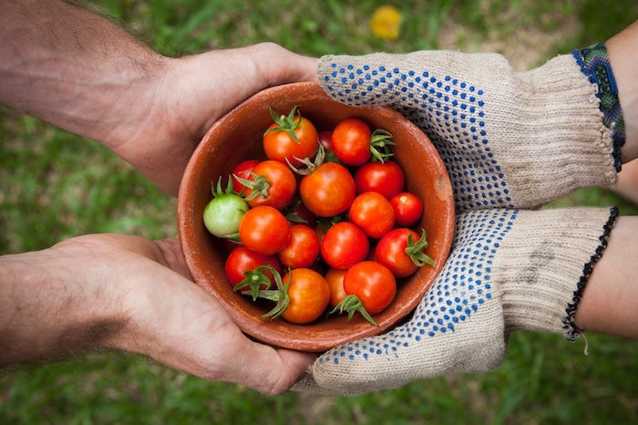 Two pairs of hands holding a bowl of cherry tomatoes