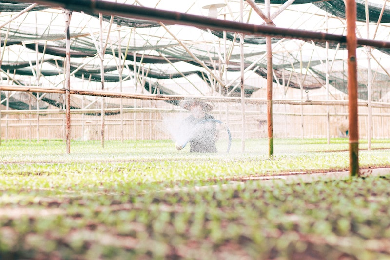 Person sprays water on plants in a greenhouse