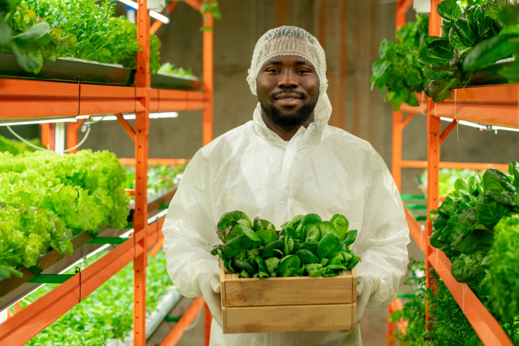 Man holding a box of lettuce in a greenhouse